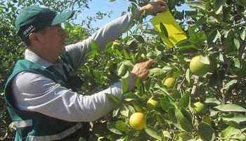 Erradicación de una planta positiva a HLB en zona urbana de Entre Ríos