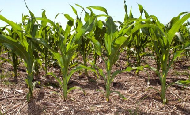 Tablero de riesgo agrícola: la nueva herramienta permite estimar probabilidad y magnitud de resultados.