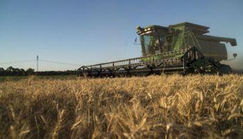 Trigo: Buenos Aires presenta el mayor retraso de cosecha contra el año pasado