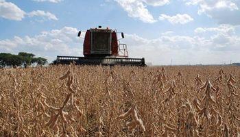 USDA: el mayor recorte se daría en la producción de soja en Brasil
