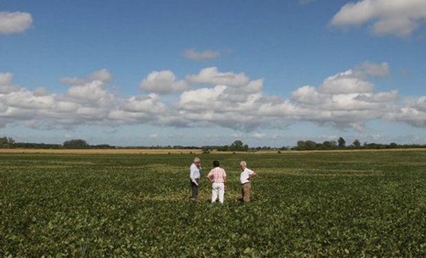 La soja enfrenta un panorama difícil en materia de rentabilidad en el Norte. Foto: LA NACION / Fernando Massobrio.