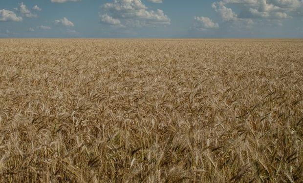 Lo comercializado de trigo 18/19 suma 10,1 mill.tt