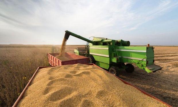 Cosecha de soja en Brasil: las reducciones de rinde van desde 5% hasta 30% o más dependiendo de la ubicación.