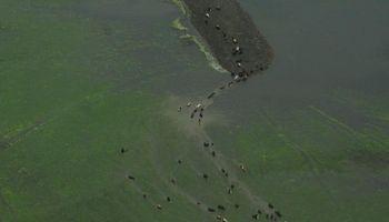 En 17 de los últimos 19 años se declaró la emergencia agropecuaria en Santa Fe