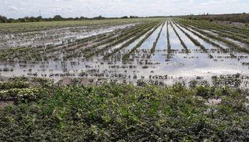 Video: así están los campos en la zona de Vera