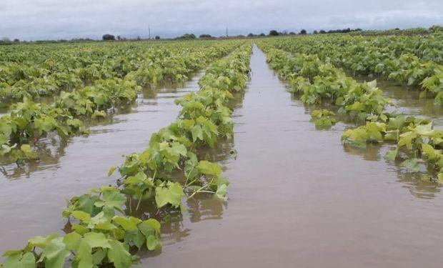 Durante los próximos días, se definirán las pérdidas de área por inundaciones que están comprometiendo el potencial de producción.
