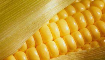 China rechazó 30% del maíz importado desde EEUU este año