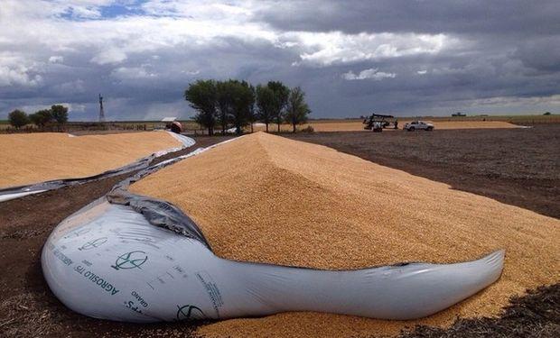 """Las bolsas destruídas cerca de General Pico. Como no hubo robo, sospechan que es """"un mensaje"""" para quienes guardan cosecha. Foto: CARBAP"""