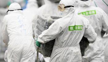 La fiebre porcina se extiende en Japón: sacrificarán 15.000 animales