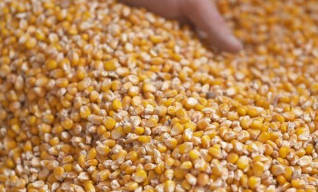 El respiro para los precios podría venir del mercado climático en el hemisferio norte, donde los cultivos estarán en pleno desarrollo.