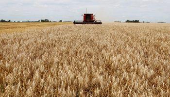 Molinos asiáticos recurren al trigo argentino por la sequía en Australia