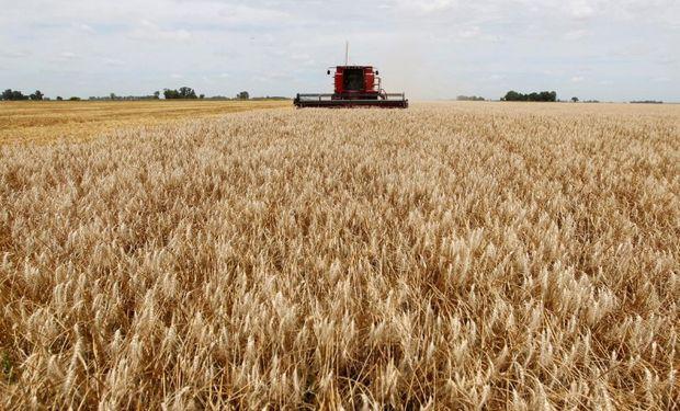 Argentina reemplaza al trigo australiano en Asia.