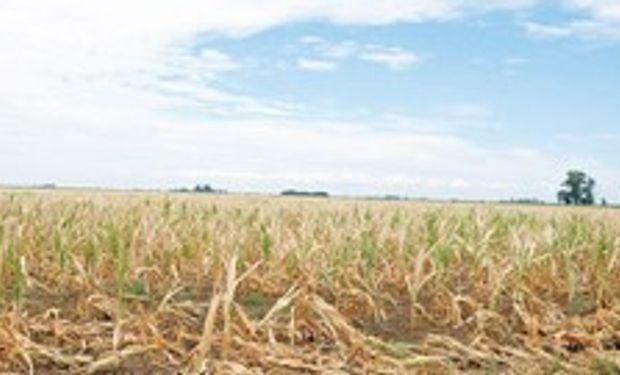 Sequía sin tregua: Chaco, una de las más afectadas