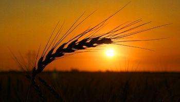 El trigo lidera las subas en Chicago por el clima seco de Rusia