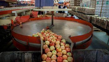 Siguen las negociaciones con Brasil para retomar los envíos de peras y manzanas
