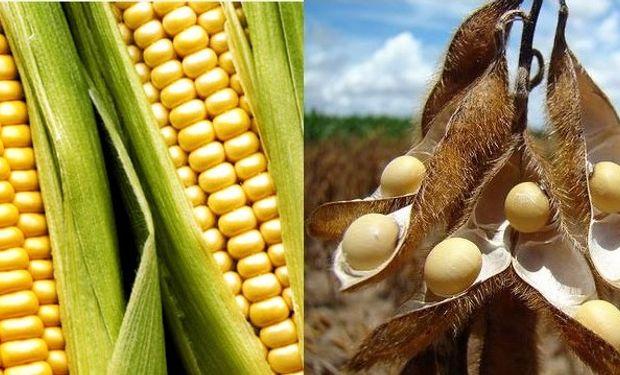 Informa Economics eleva las previsiones de maíz y soja en Estados Unidos