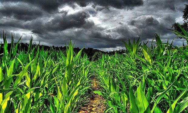 Las buenas perspectivas climáticas presionan la cotización de los granos en Chicago.