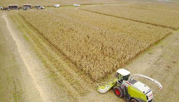 Nueve temas que los ganaderos deben tener en cuenta