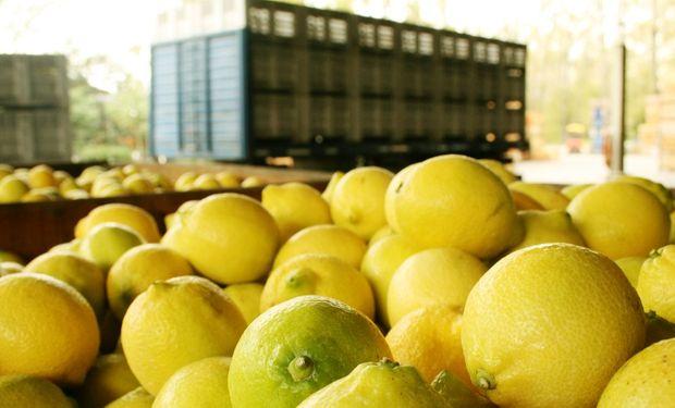 Argentina es el primer exportador mundial de limones amarillos frescos.