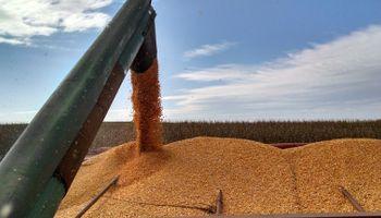 Producción agrícola: qué provincia tiene la mayor carga impositiva