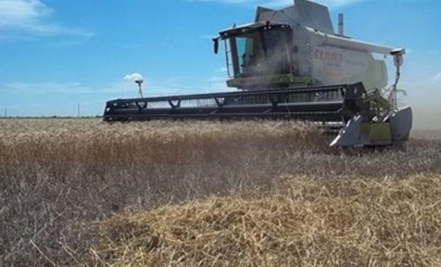 Se cosechó el 75% del trigo en el centro norte de Santa Fe