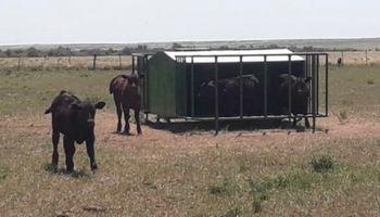 Creep feeding, una práctica que muestra resultados importantes en zonas semiáridas