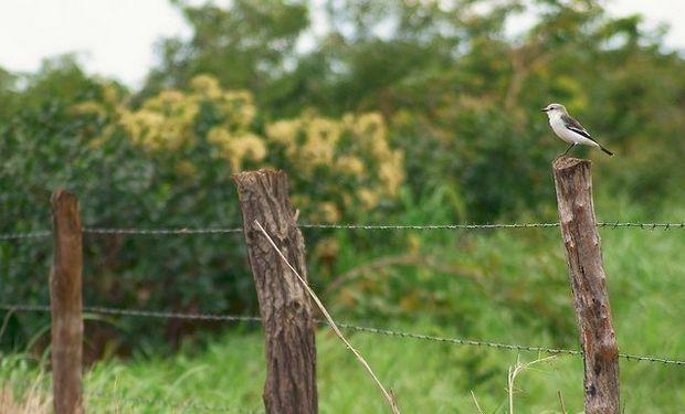 Productores agropecuarios: regímenes de información