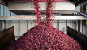 Bodega sanjuanina elabora harina de Malbec para hacer alimentos sin gluten