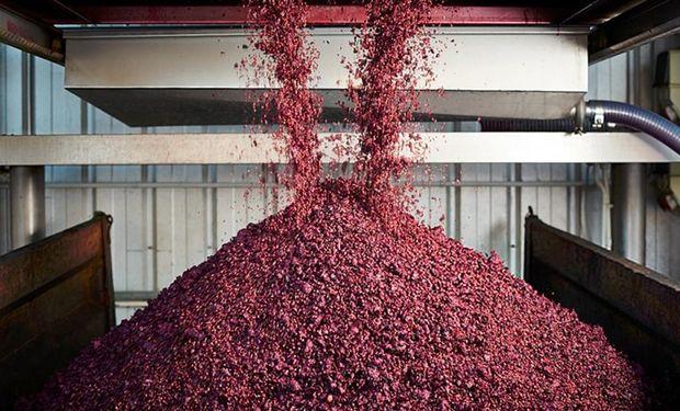El orujo, hollejo o la piel de la uva hasta ahora no fue usada para la alimentación humana.