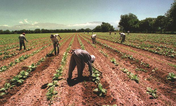 La responsabilidad solidaria en la contratación de trabajadores rurales
