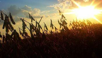 La soja se recupera del mínimo de las últimas tres semanas