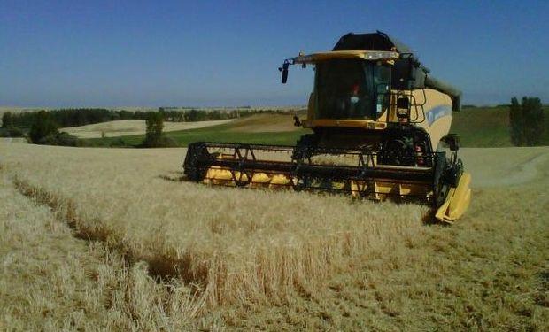 Mejora panorama de cosecha de trigo en Europa occidental