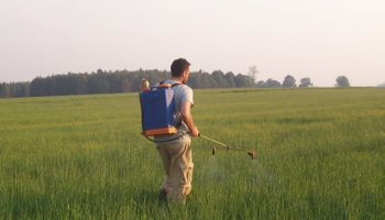 Mejoran la calidad de la cebada a través de ajustes en la fertilización