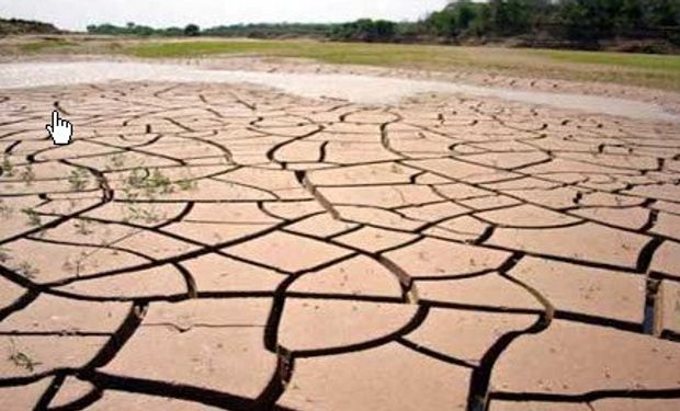 Una histórica y feroz sequía arrasa la producción agropecuaria salteña
