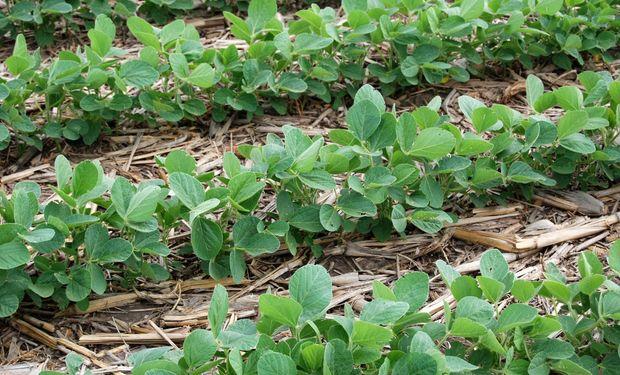 Fertilización en soja, la importancia de un buen arranque