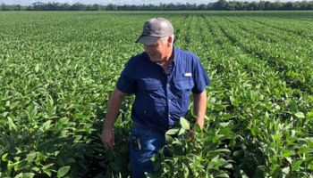 Trump destinará US$ 12 mil millones para agricultores de Estados Unidos