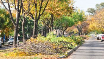 Arboricultura urbana: elegir árboles en función del ambiente