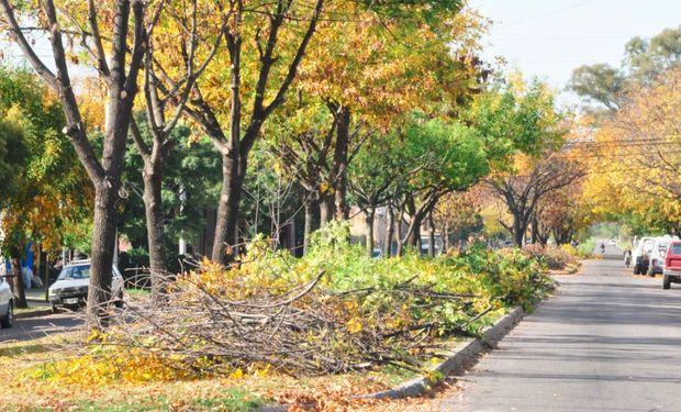 La arboricultura urbana es la ciencia dedicada y especializada al manejo del arbolado urbano.