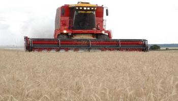 Argentina está en condiciones de producir 27 millones de toneladas de trigo