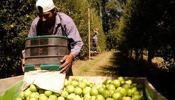 Media sanción para prorrogar la emergencia económica para peras y manzanas
