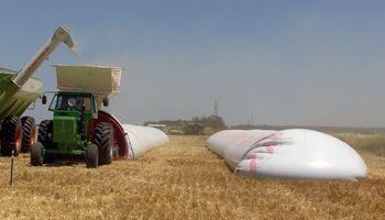 Cómo almacenar los granos para preservar su calidad