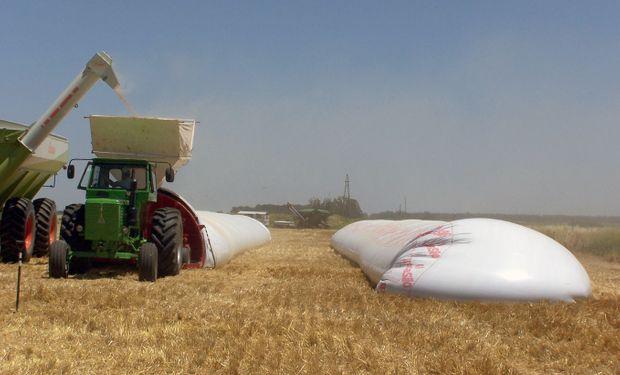 La principal herramienta para minimizar el desarrollo de micotoxinas es el almacenamiento de los granos secos.