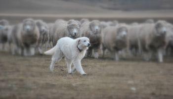 Día del animal: las mejores razas de perros para el campo