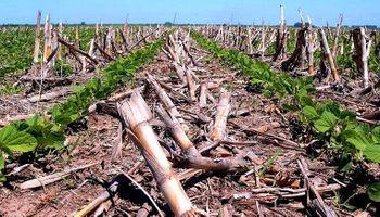 Buscan certificar el balance de carbono del sistema de producción argentino