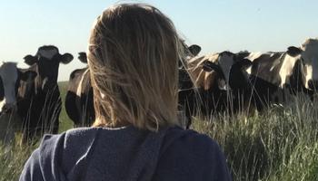Sin arraigo: tambero se dio a la fuga y dejó 150 vacas a la deriva