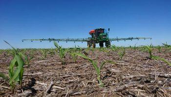 Se viene el maíz de primera: ¿Alimentamos las bacterias del suelo para potenciar rendimientos?