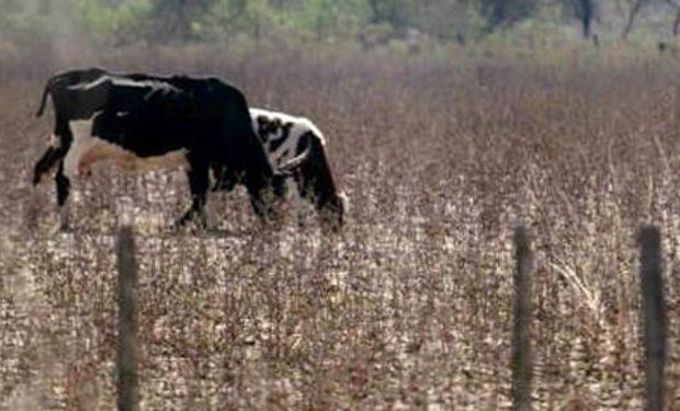 Provincia llama a emergencia agropecuaria por el impacto de la sequía