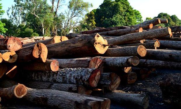 200.000 empleos: el sector forestal tiene potencial para duplicar a la industria automotriz