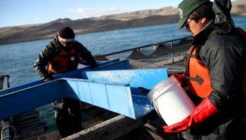 Impulsan proyectos productivos para potenciar al sector acuícola