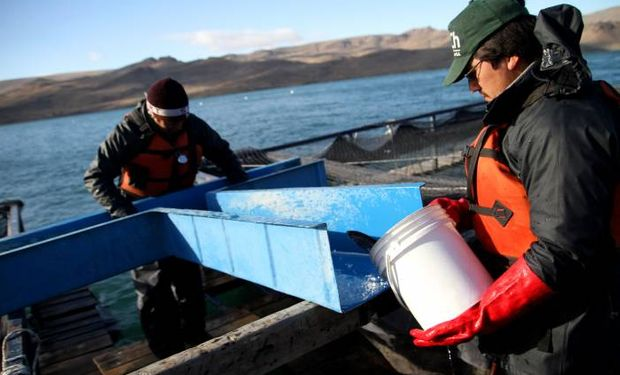 Agricultura impulsa proyectos productivos para potenciar al sector acuícola.